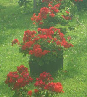 Flowers.009