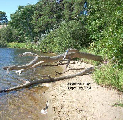 codfresh lake cape cod usa